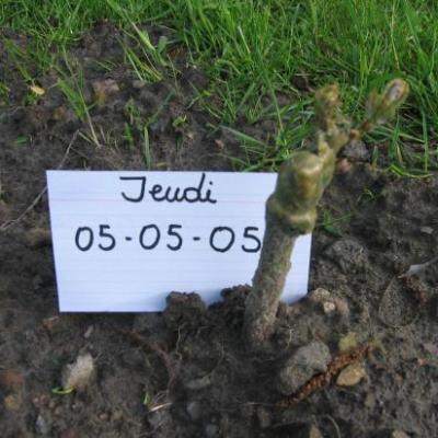 Le 05-05-05 Premier signe de vie