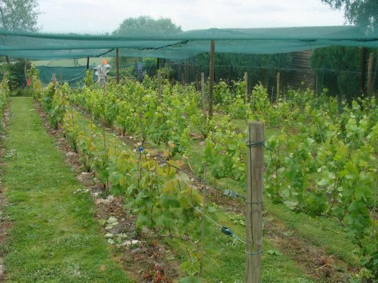Entretien de la vigne